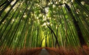 Bosque_bambu1